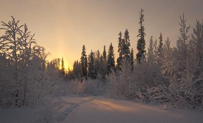*** зима лес рассвет