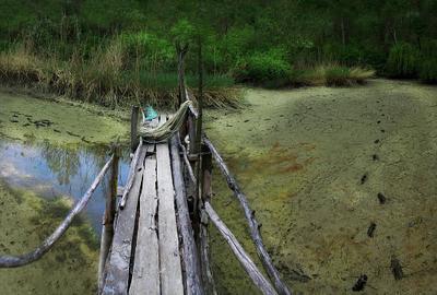 в заколдованном болоте высохшее озеро, болото, тина, мостик, сети, деревья, кусты, лужа, следы