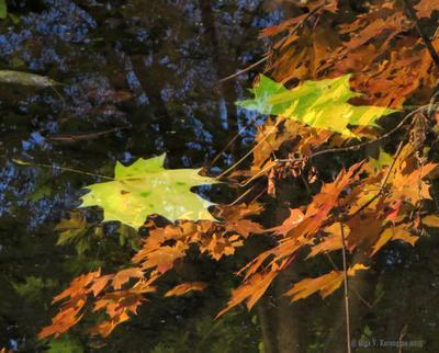 Подобное в подобном осень лист кленовый осенний отражение