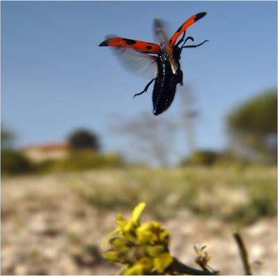 Небо голубое, для жука не ставшее судьбою...