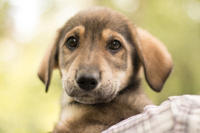 Щенок щенок собака