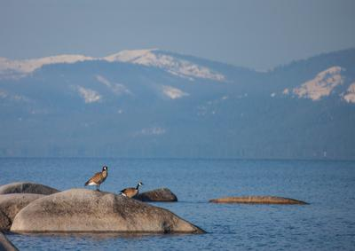 Утром на озере озеро Тахо