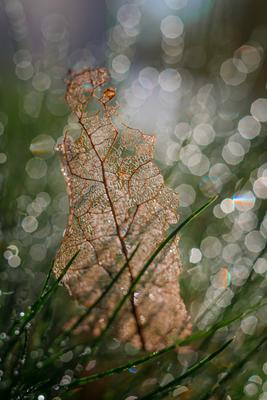 Листок Макро весна природа боке капли трава
