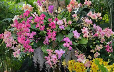 Планета орхидей Орхидеи