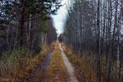 Дорога в Демидово.