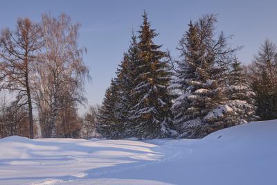 Накануне весны Снег мороз небо лес