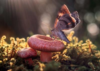 *** лес природа макро гриб волнушка бабочка мотылек луч боке мох
