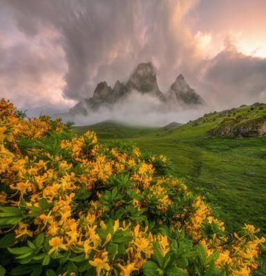 Пьянящий аромат Азалии Северный кавказ ингушетия цей-лоам азалия рассвет июнь