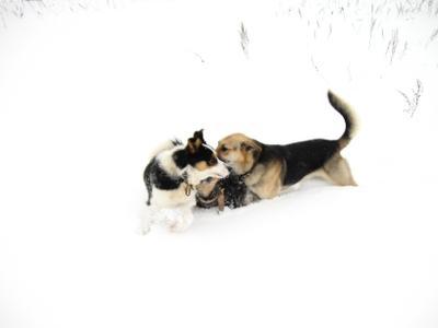 Совещание собака зима прогулка