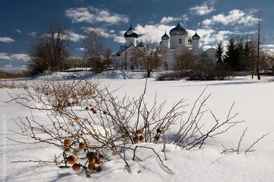 Весенний пейзаж с замерзшей айвой Великий Новгород Зверин Покровский Монастырь Весна