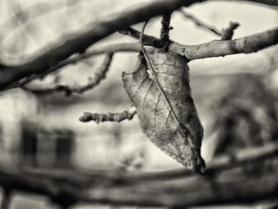 *** листья макро флора