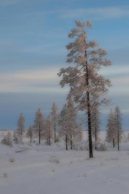 На севере диком... Север Ямало-Ненецкий автономный округ