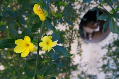 цветы и коты цветы кот макро
