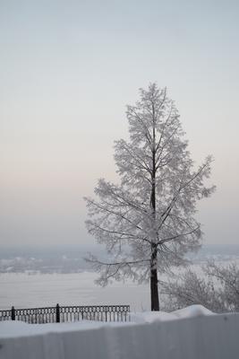 *** Пермь Кама мороз снег река дерево