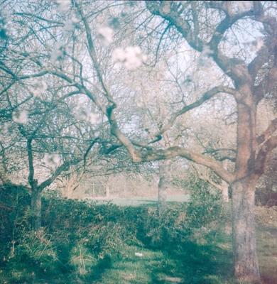 пейзаж с цветущей веткой