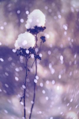 Танец со снежинками...