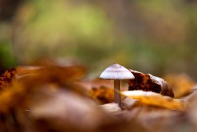 *** Осень гриб листва бокэ