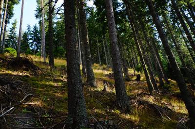 Лес Лес дерево