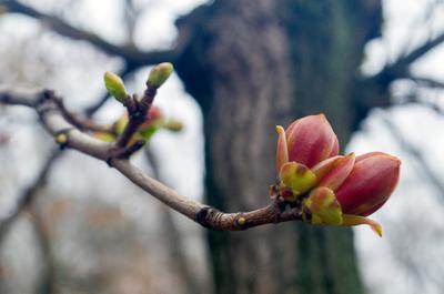 Уже весна. Первые. к.6 Весна
