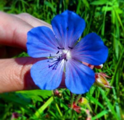 Яркий цвет цветы природа мир