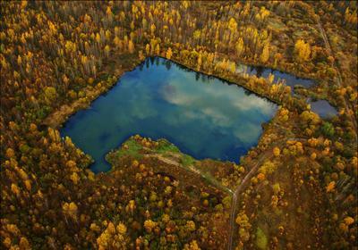 болото болото лес осень