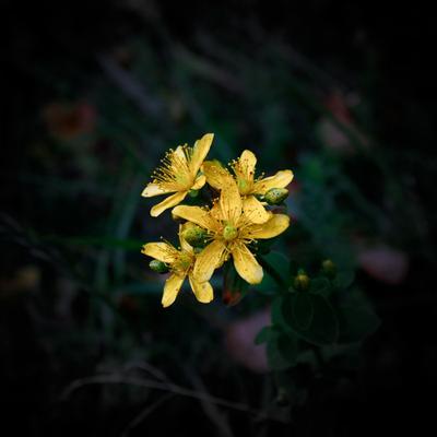 Желтый цветок желтый цветок лес природа