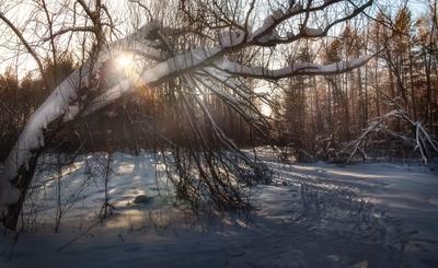 Лешие Зима снег деревья