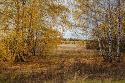 Золотая осень природа пейзаж осень березы татарстан каймары