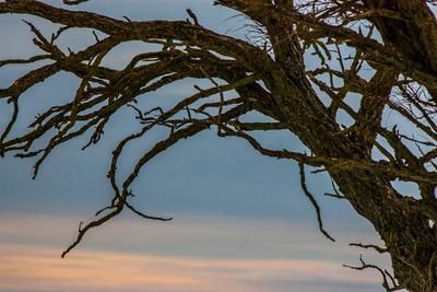Закат Закат дерево