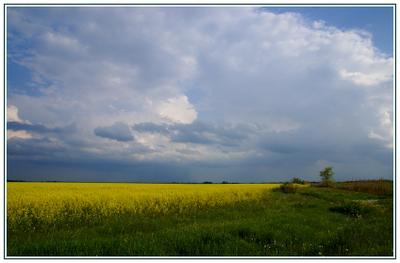 * * * Природа, поле, Крым