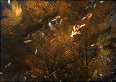 вода осень... природа вода осень листья деревья отражение
