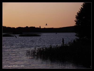 Чайки Тракай, Литва, озеро, закат, чайки, дети