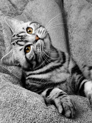 Угол зрения Кот взгляд мысли