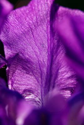 *** лепесток цвет