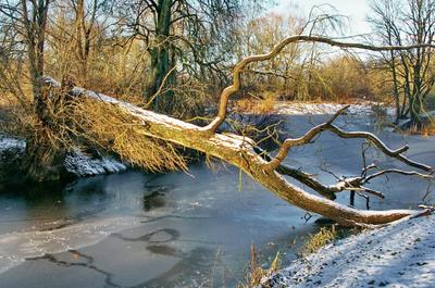 Перелом Весна природа река остров дерево