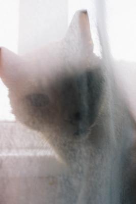 мэрилин Кото кот фотомодель модель коты животное животные котики портрет