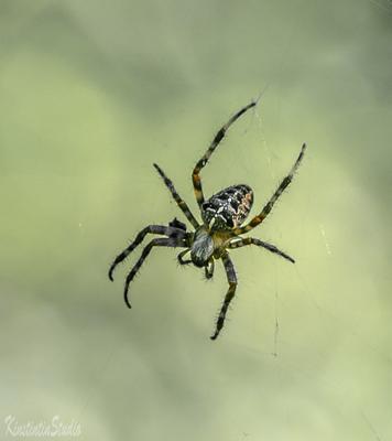 Паук паук осень сентябрь