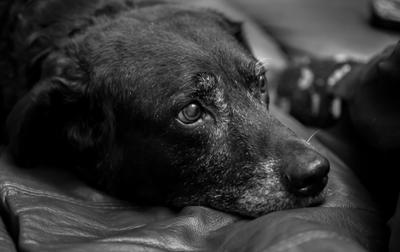 Старый друг dog