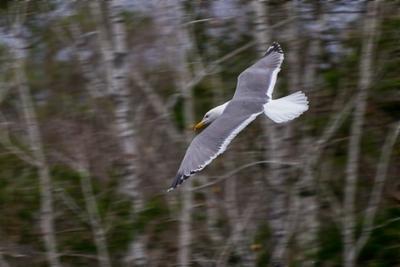 *** чайка птица птицы животные