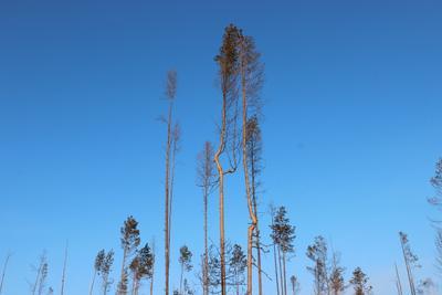 Танец Дерево небо природа лес