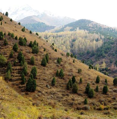 *** горы осень