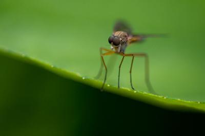 Зеркало души насекомые муха глазищи