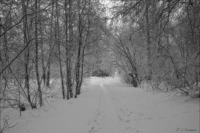 Чёрно-белый пейзаж (фото №2)