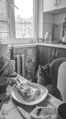 О! Паучек! Дом квартира кухня кошка животное стол посуда холодильник окно