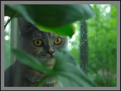 дождливая... кошка