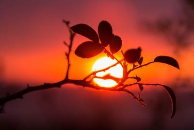 Вокруг солнца Солнце закат природа
