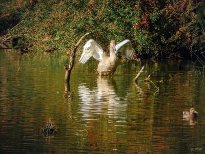 Расправляя крылья