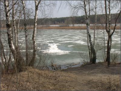 Весенний снегоход на озере. весна озеро лед березы