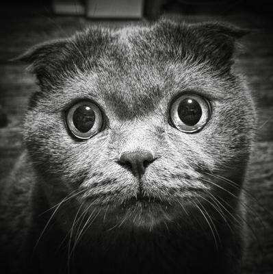 Безотказный... Кот взгляд гипноз смартфон