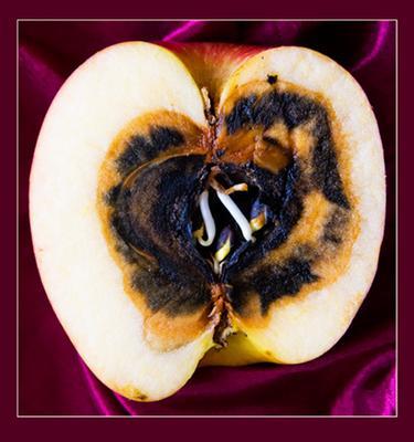 Внешность...и содержание... яблоко природа красота натюрморт